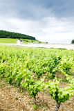 Vineyards in France Royalty Free Stock Photos