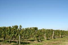 Vineyards, France stock photo