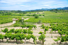 Vineyards in France Royalty Free Stock Images