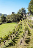Vineyards in France Royalty Free Stock Image