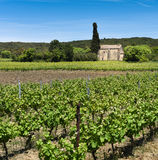 Vineyards - France Royalty Free Stock Images