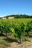 Vineyards and french village Stock Images