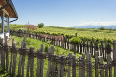 Vineyards in front of old house Royalty Free Stock Image