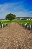 Vineyards of Frontenas, Beaujolais, Rhone, France Royalty Free Stock Photos