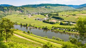 vineyards and gardens in valley of Mosel river Stock Photography