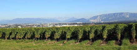 Vineyards at Geneva, Switzerland Stock Photos