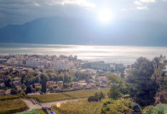 Vineyards in Geneve. Vineyards just outside Geneva in Switzerland on a cloudy day stock photos