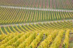 Vineyards in Germany Stock Photos