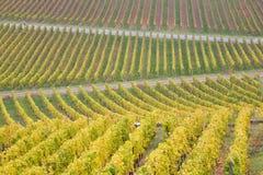 Vineyards in Germany. Vineyards near Johannisberg Palace, Hessen, Germany Stock Photos