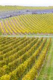 Vineyards in Germany Stock Photography