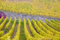Vineyards in Germany Royalty Free Stock Image