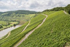 Vineyards in Germany along river Moselle Stock Photos