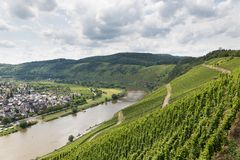 Vineyards in Germany along river Moselle near Punderich. Germany Stock Images