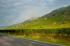 The vineyards in Germany Stock Photography