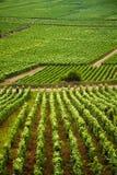 Vineyards in Gevrey chambertin burgundy France stock image