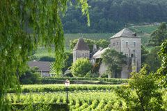 Vineyards in Gevrey Chambertin Royalty Free Stock Photography