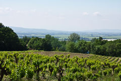The Vineyards of Gigondas. View of vineyards and rolling hills from Gigondas, France stock images