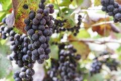 Vineyards Royalty Free Stock Photos