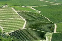 Vineyards green background in a sunny day. Vineyards green background with paths from above in a sunny day Royalty Free Stock Photos