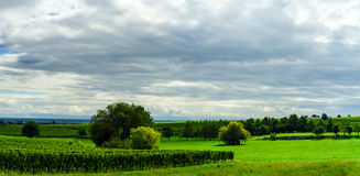 Vineyards and green field panoramic view Royalty Free Stock Photo