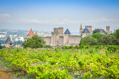 Vineyards growing outside the medieval fortress of Carcassonne i. N France Royalty Free Stock Photos