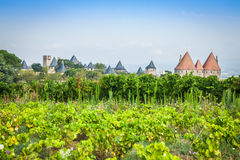 Vineyards growing outside the medieval fortress of Carcassonne i. N France Stock Photos
