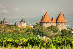 Vineyards growing outside the medieval fortress of Carcassonne i. N France Stock Photography