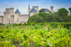 Vineyards growing outside the medieval fortress of Carcassonne i. N France Stock Images