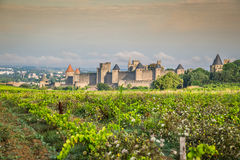 Vineyards growing outside the medieval fortress of Carcassonne i. N France Royalty Free Stock Image