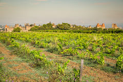 Vineyards growing outside the medieval fortress of Carcassonne i. N France Royalty Free Stock Photography