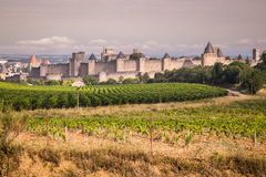 Vineyards growing outside the medieval fortress of Carcassonne i. N France Royalty Free Stock Images