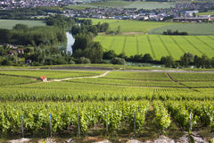 Vineyards - Hautvillers near Reims - France. Vineyards and the River Marne at Hautvillers near Epernay (in background), south of Reims in northern France stock photography