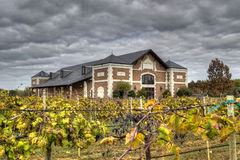Vineyards HDR. HDR vineyards in Grapevine Texas showing clouds, grapevines, and building royalty free stock image