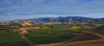 Vineyards HDR Royalty Free Stock Image