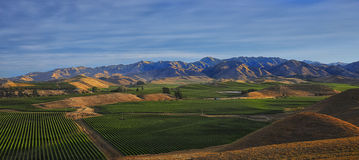 Vineyards HDR. An late afternoon HDR image of rows of vines looking toward mountains in the distance Royalty Free Stock Photos