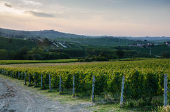 Vineyards on a hill Royalty Free Stock Photo