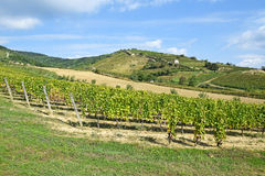 Vineyards at the hill side, Tokaj Stock Photo