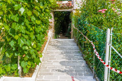Vineyards in hill village in Italy Royalty Free Stock Photography