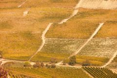 Vineyards on hill with yellow leaves in a sunny fall day Royalty Free Stock Photo