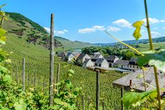 Vineyards on the hills along the moselle river royalty free stock images