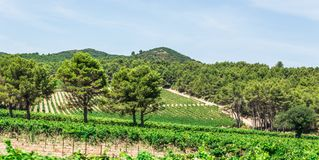 Vineyards and hills in the Alpilles region Royalty Free Stock Photo