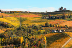 Vineyards on the hills in autumn in Italy. Stock Images