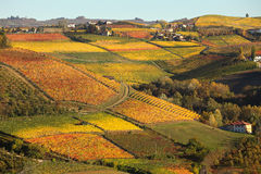 Vineyards on the hills in autumn in Piedmont, Italy. Royalty Free Stock Image
