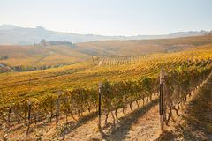 Vineyards and hills in autumn with yellow leaves in a sunny day Stock Photo