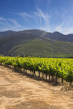 Vineyards with hills and cloudy blue sky Royalty Free Stock Images
