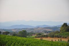 Vineyards and hills Florence Tuscany Royalty Free Stock Photo