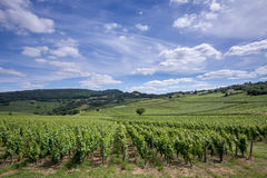 Vineyards on hills in France Stock Photos