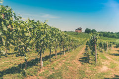 Vineyards, hills and a house. Vineyards,hills and a house Royalty Free Stock Image