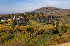 Vineyards, Hills and Houses in Vienna in the Autumn Stock Photography