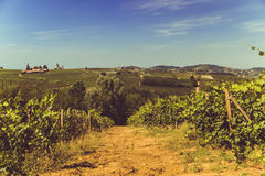 Vineyards and Hills in Italy. Vineyards and Hills, in Italy Royalty Free Stock Photos